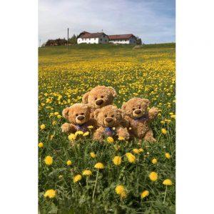 """Badetuch groß """"Travelling Teddy Löwenzahn"""" 90x140cm"""